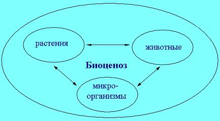 Реферат на тему биогеоценоз 7467