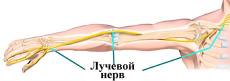 Реферат неврит лучевого нерва 8871